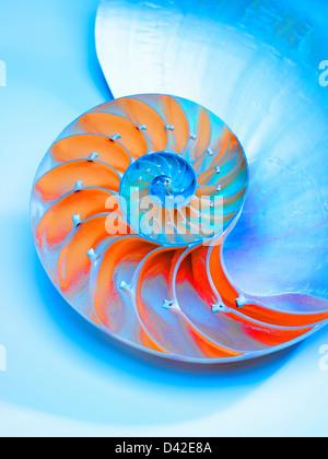 Nautilus Shell traversée dans la moitié montrant le Nautilus Pompilus,chambres,genre Nautilus Banque D'Images