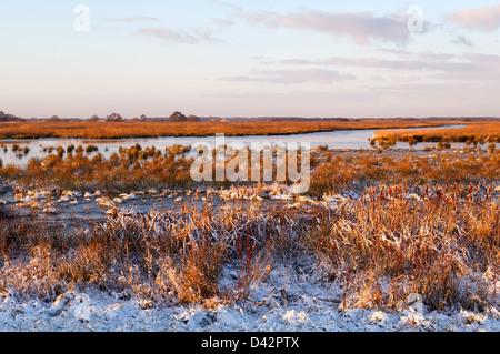 Marécage gelé dans le lever du soleil en hiver, Drenthe Banque D'Images