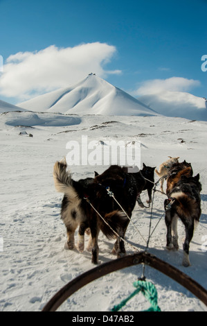 Attelage de Huskies tirant un traîneau dans la neige en mai sur le Spitzberg Banque D'Images