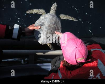 Les tortues remises en état libéré au large de la Caroline du Nord Banque D'Images