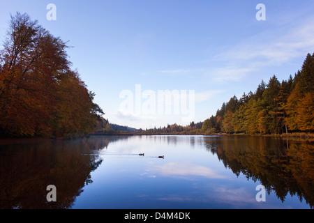 Arbres se reflétant dans le lac encore rurales Banque D'Images