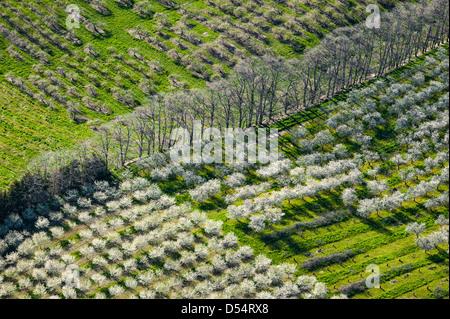Vue aérienne de la cerisaie en fleurs de printemps dans le Comté de Mason, Michigan, USA. Photographie par Jeffrey Wickett, NorthLight la photographie.