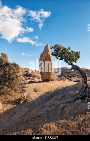 Cet emblématique boulder est un arbre par juniper à roches Jumbo dans la Parc National de Joshua Tree. Banque D'Images