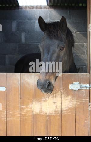 Dark Horse stable dans la baie Banque D'Images