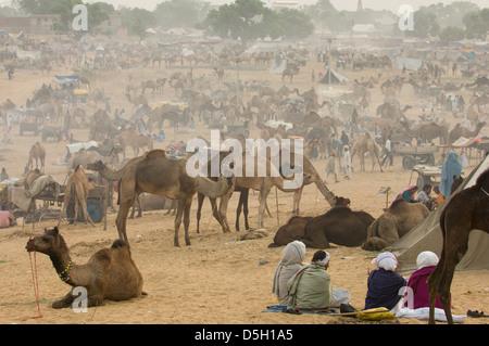 Les hommes du Rajasthan assis dans un camp dans le désert, entouré de chameaux, Pushkar Mela, Pushkar, Rajasthan, Banque D'Images
