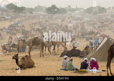 Les hommes du Rajasthan assis dans un camp dans le désert, entouré de chameaux, Mela Pushlar, Pushkar, Rajasthan, Banque D'Images