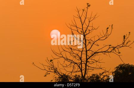 Silhouette d'arbre dans l'heure du coucher du soleil Banque D'Images
