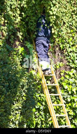 Standing jardinier travaillant sur les hedge Séville Andalousie Espagne Europe Banque D'Images