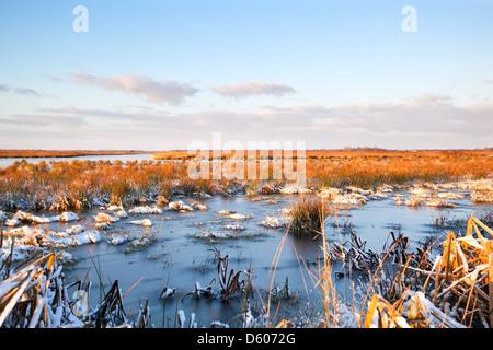 Marécage gelé dans Drenthe Banque D'Images
