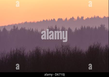 L'humeur du soir dans le solling, weserbergland, holzminden, Niedersachsen, Allemagne