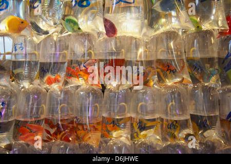 Poissons tropicaux au pet shop, Mongkok, Hong Kong, Chine, Asie Banque D'Images