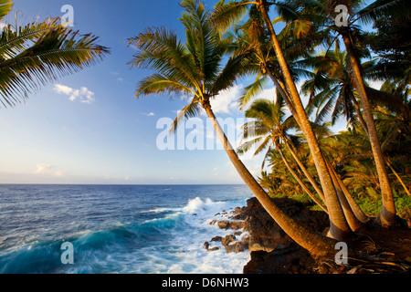 Palmiers et vue sur l'océan le long Kalapana-Kapono Autoroute (le 'Red Road'), Big Island, Hawaii Banque D'Images