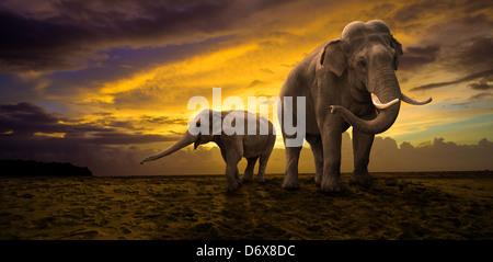 Famille d'éléphants sur le coucher du soleil