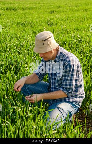 Dans l'homme champ de blé. Les jeunes travailleurs agricoles en champ de blé vert. Banque D'Images