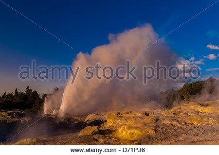 Les 30 mètres de haut Pohutu Geyser, en éruption (Te Puia New Zealand Maori Arts & Crafts Institute), la vallée Banque D'Images