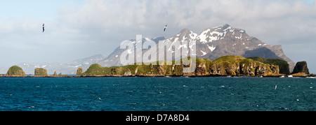 Albatros hurleur Diomedea exulans survolant Bay Isles South Georgia Island Banque D'Images