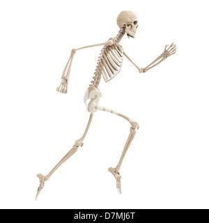 L'exécution de skeleton, artwork Banque D'Images
