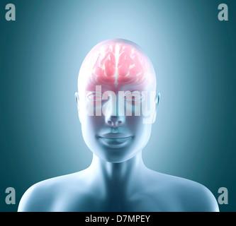 Cerveau humain, artwork Banque D'Images