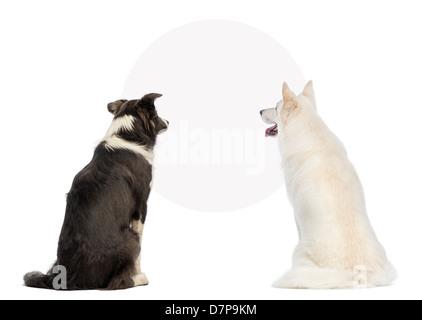 Vue arrière de deux chiens à la Vierge à un signe, in front of white background Banque D'Images