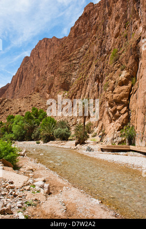 La rivière Todgha fonctionnant par les Gorges de Todra, Maroc, Afrique du Nord Banque D'Images