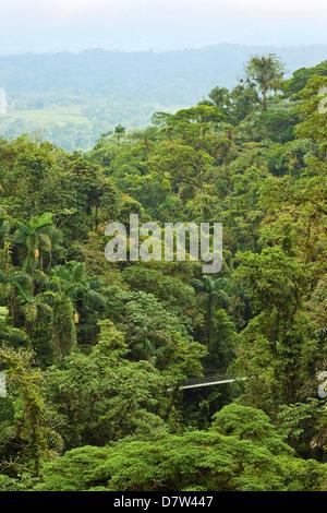 Jungle à ponts suspendus d'Arenal où de forêt vierge est accessible par des passerelles, la Fortuna, Province d'Alajuela, Banque D'Images