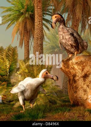 Une paire d'oiseaux Dodo jouer une partie de cache-cache.