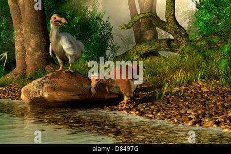 Une paire d'oiseaux Dodo de boire à une rivière.