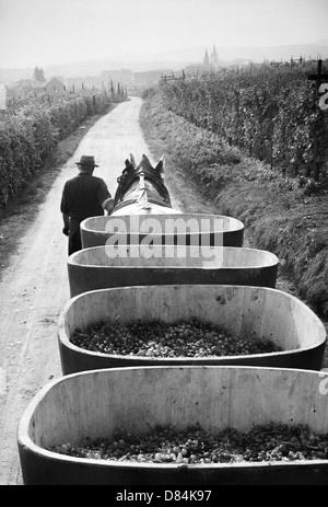 1963 avec remorque à chevaux vendanges Alsace France Europe Banque D'Images