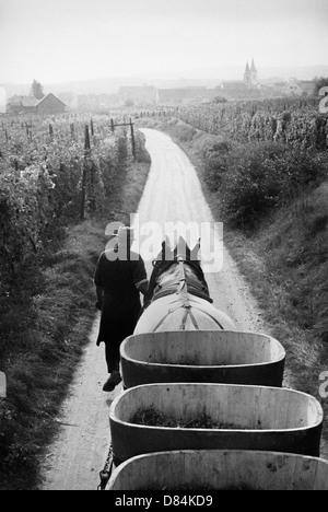 1963 avec remorque à chevaux récolte de raisin Alsace France Europe Banque D'Images