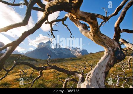 Parc National Torres del Paine, Chili Banque D'Images