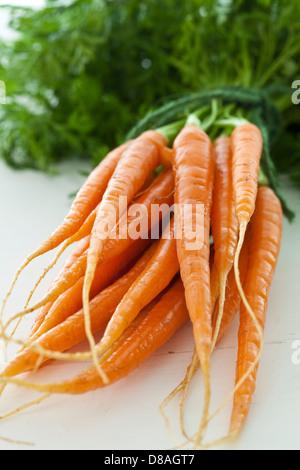 Un tas de produits frais carottes néerlandais avec les fanes vertes toujours attachés, liés ensemble avec string Banque D'Images