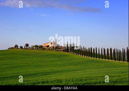 Italie, Toscane, Val d'orcia, champs de blé, de cyprès et de la chambre Banque D'Images