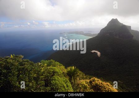 Vue depuis les pentes du Mont Gower dans Mt Lidgbird vers le lagon, avec la providence par vol pétrel, Lord Howe Banque D'Images