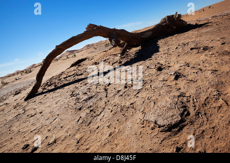 À partir d'une branche d'arbres tamaris morts dans le désert du Sahara. Banque D'Images