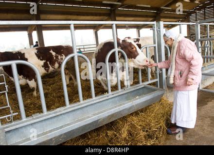 Gokul pix et laitiers copyright Nick Hare Krishna Cunard Le troupeau de 44 vaches et boeufs à George Harrison, ancien hôtel particulier dans le Hertfordshire est aussi calme que d'un temple. Gokul ferme laitière [sens place de vaches ] comprend 44 vaches et boeufs partie de George Harrison's vieux manoir Bhaktivedanta Manor dans le Hertfordshire . Un £2.5m 'protégé' vache complex c'est appelé un 'Hilton pour les vaches' et un modèle de développement durable de l'élevage laitier. Les 3 000 m² de l'immeuble qui est la résidence d'hiver du troupeau, est un croisement entre une crèche, un atelier et une vieille maison de vache. Même si ce n'est pas actuellement en vente au public les coûts informatiques
