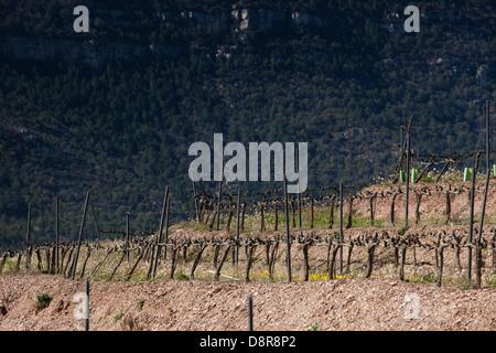 Vignobles de Priorat , Catalogne, Espagne Banque D'Images