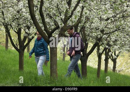 Quelques promenades sous les cerisiers fleuri dans les jardins de la colline de Petrin, à Prague, République tchèque, le 1 mai 2013.