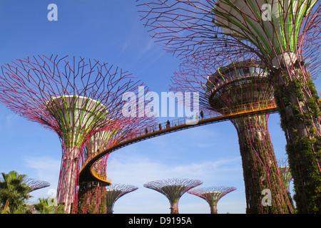 Singapour, Asie du Sud-est, jardins près de la baie, parc, Supertrees, passerelle surélevée, visites touristiques Banque D'Images