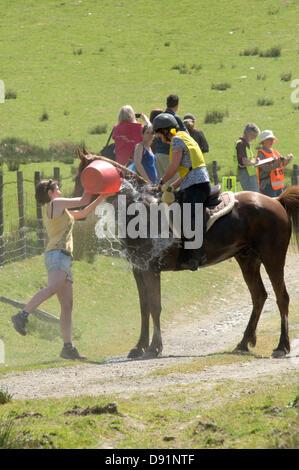 Llanwrtyd Wells, Royaume-Uni. 8 juin 2013. Plus de 400 coureurs en compétition contre 65 chevaux dans l'Homme Cheval V 23 km marathon, sur un terrain montagneux difficile.L'événement a été conçu par Gordon Green à son bras la pub Neuadd en 1980 après avoir entendu une discussion pour savoir si un homme était égale à un cheval qui cross country à distance. Le prix en argent pour battre un cheval a été augmenté chaque année jusqu'à 1 000 € par Huw Lobb a gagné £25 000 en 2004 en battant le premier cheval de 2 minutes avec un temps de 2:05:19. Credit: Graham M. Lawrence/Alamy Live News.