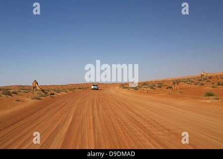 Route du désert de Wahiba Sands, Al Mintrib, Oman Banque D'Images
