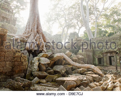 D'épaisseur des racines d'arbre grandir à travers les ruines de Ta Prohm temple à Angkor, la Province de Siem Reap, Banque D'Images