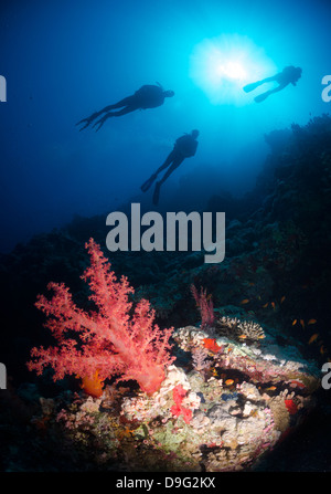 Silhouette de trois plongeurs sous-au-dessus de coraux, parc national Ras Mohammed, Red Sea, Egypt, Africa Banque D'Images