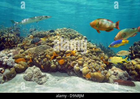 Dans un paysage sous-marin avec des récifs coralliens avec poissons tropicaux colorés et surface de l'eau en arrière Banque D'Images