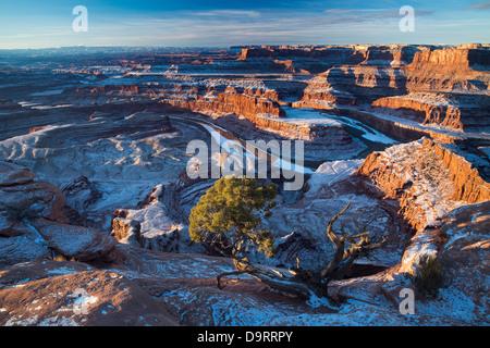 La vallée du Colorado à partir de Dead Horse Point à l'aube, Utah, USA Banque D'Images