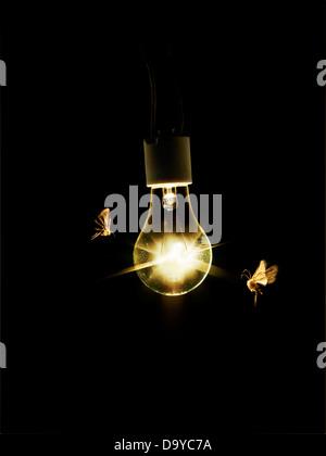 Ampoule avec papillons Banque D'Images