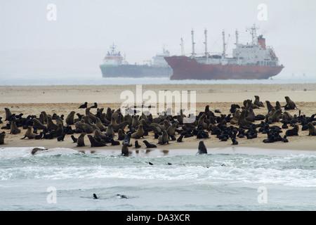 Colonie de phoques à fourrure (Arctocephalus pusillus) à Pelican Point, et bateaux ancrés à Walvis Bay, Namibie, Banque D'Images