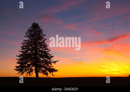 LONE PINE TREE SILHOUETTE UNIQUE SUR L'HORIZON Banque D'Images