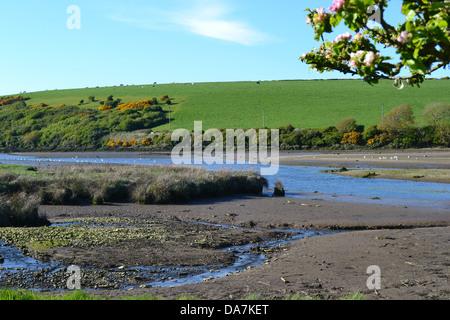 L'ensemble du les battures de l'estuaire à marée basse Nevern avec green hill et les moutons au-delà, les cerisiers Banque D'Images