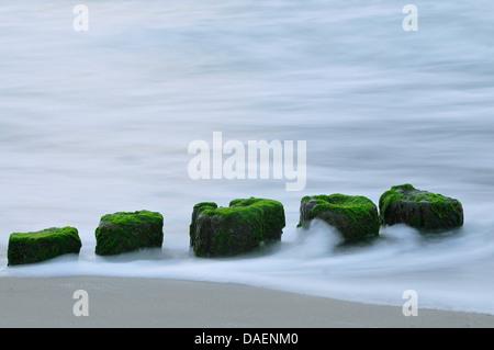 Les eaux de la mer Baltique s'écoule autour des poteaux épi recouvert d'algues, de l'Allemagne, Mecklembourg-Poméranie-Occidentale
