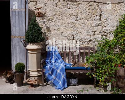 Petite boîte arbre en pot vieille cheminée à côté de banc en bois avec jet blue vérifié et chat tigré contre mur Banque D'Images